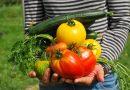 Agroecología y organización desde la ciudad